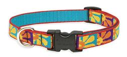 Crazy Daisy 3/4 Adjustable Medium Dog Collar - Size: Medium