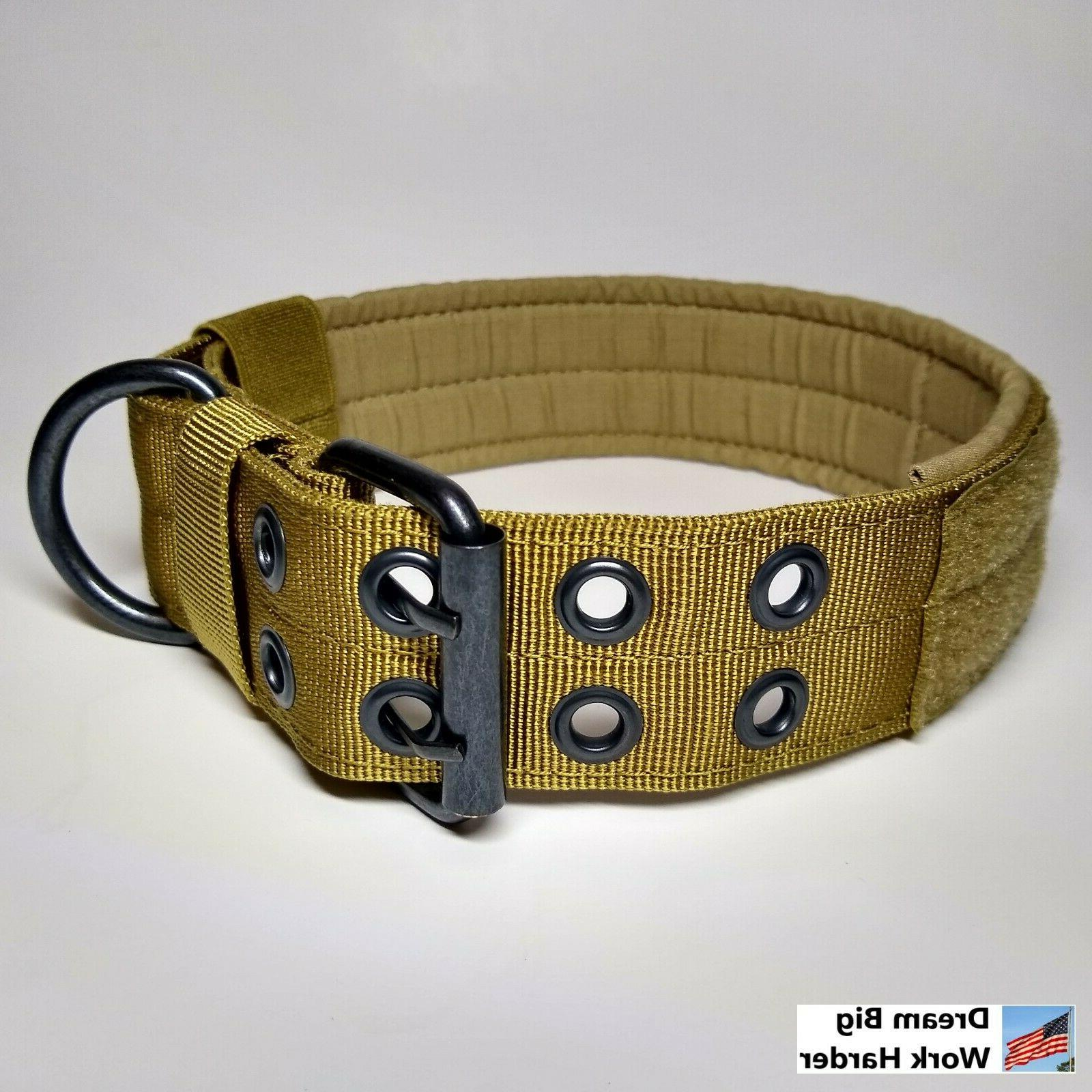 Large Heavy Dog with Buckle