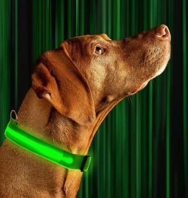 SAFETY LED Dog Glow 6 Color