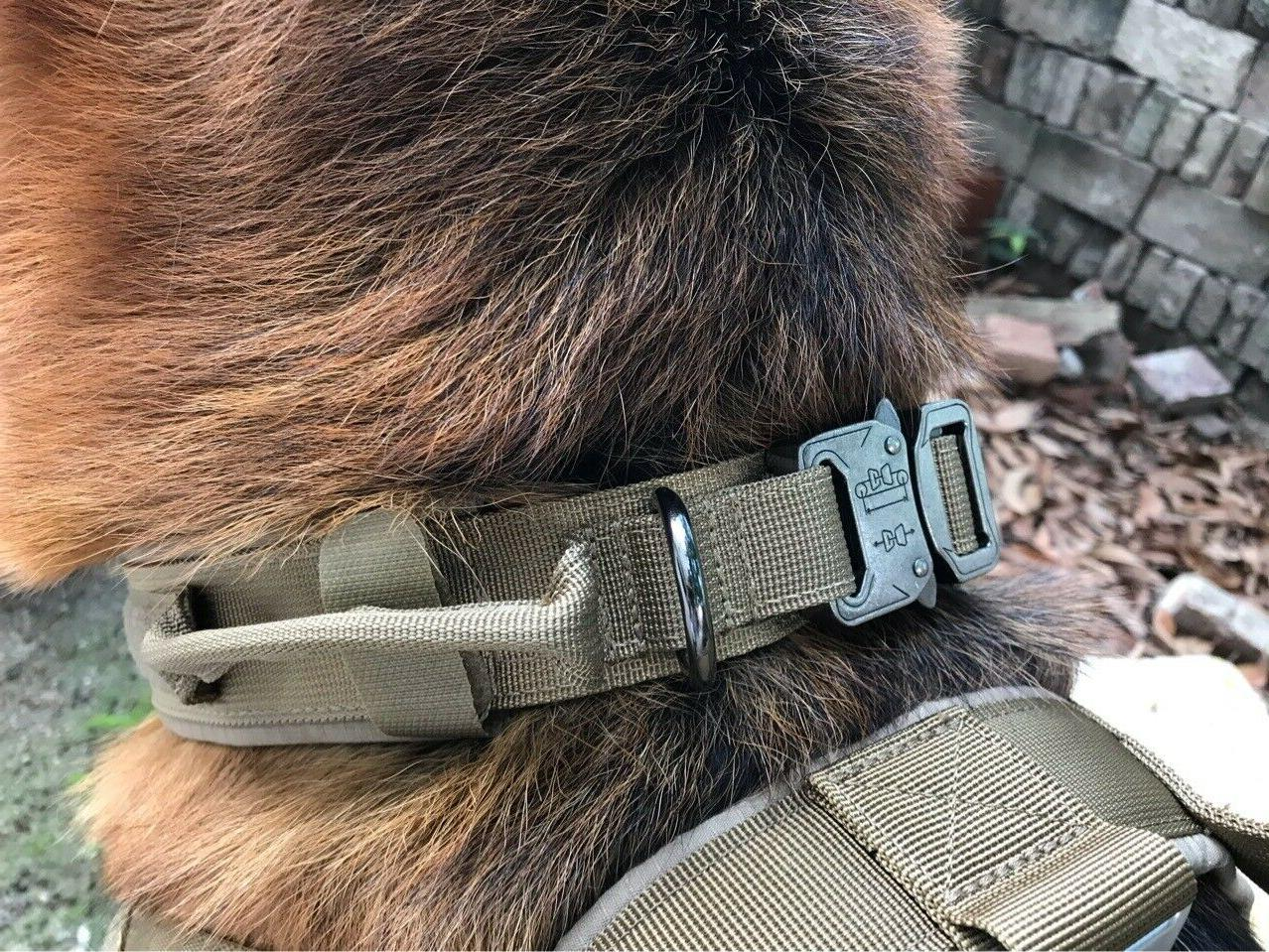 Training Collar with Buckle for L Heavy